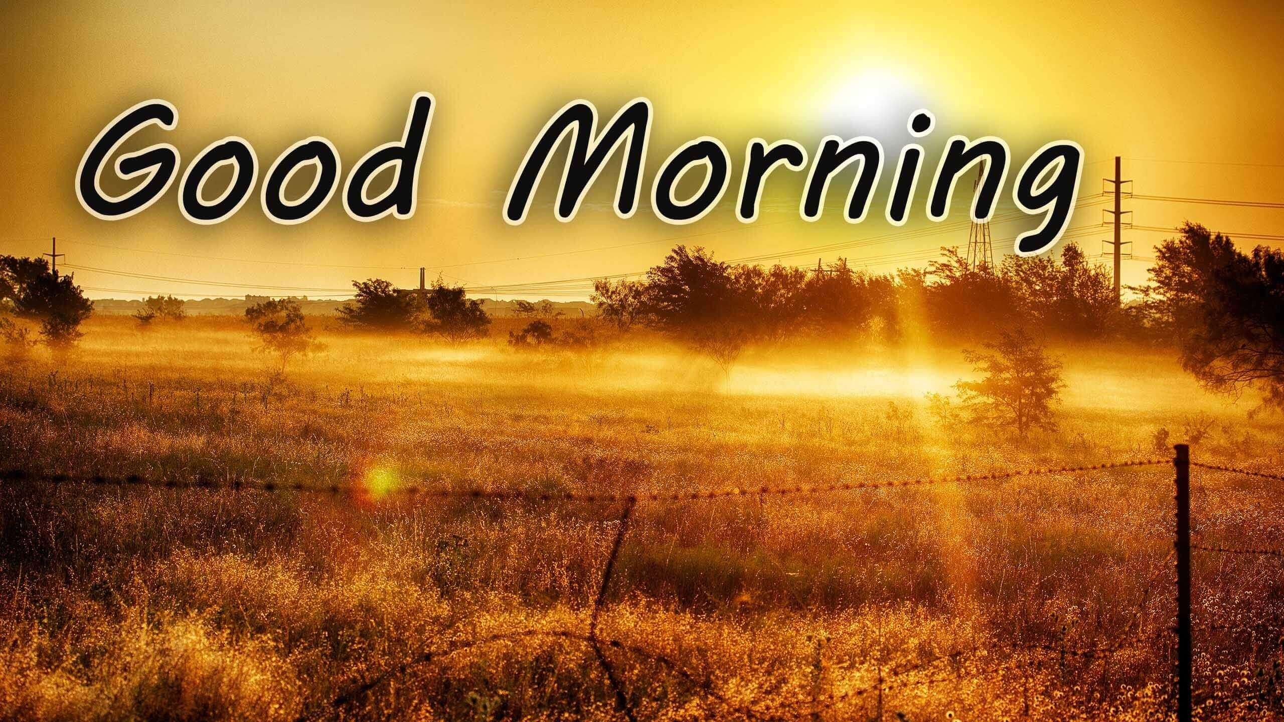 Good Morning Whatsapp Video Status & Quotes Free Download.