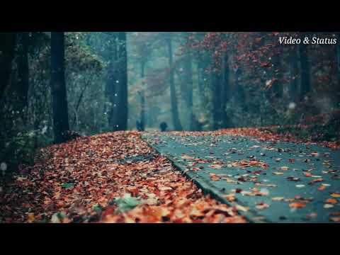 Bina Tere Dilkash Nazara Hum Na Dekhenge | Neha Kakkar _ Whatsapp Status | Swag Video Status