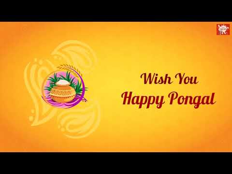 Pongal Wishes 2019 Wish You Happy Pongal Whatsapp Status | Swag Video Status