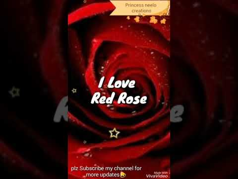 Happy rose day 2019 full screen whatsapp status video | Tere Dil KI galiyo me | Swag Video Status