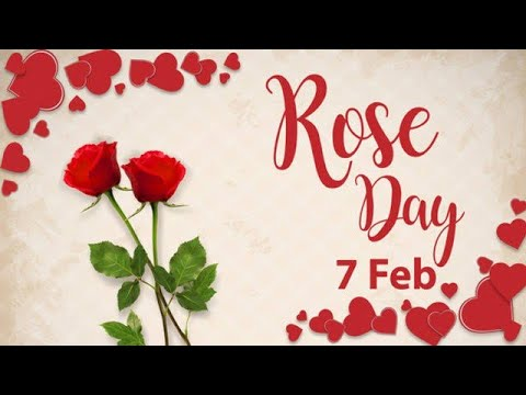 HAPPY ROSE DAY / WhatsApp status video / rose day special Shayari / 2019 | Swag Video Status