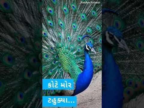 Kote mor tahukya Ashadhi bij whatsapp status | Swag Video Status