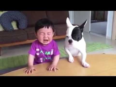 Whatsapp funny videos 2018 - Most funny DOG AND KIDS | Swag Video Status